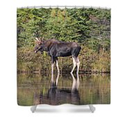 Bull Moose 3 Shower Curtain