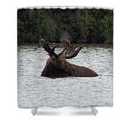 Bull Moose - 3587 Shower Curtain