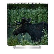 Bull Moose   #5701 Shower Curtain