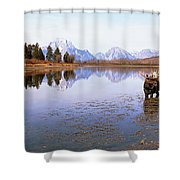 Bull Moose Grand Teton National Park Wy Shower Curtain