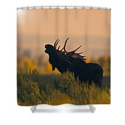 Bull Moose Grunting Shower Curtain