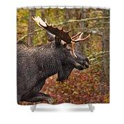 Bull Moose II Shower Curtain