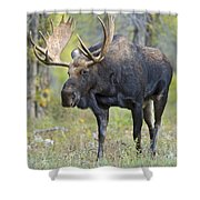 Bull Moose IIIIi Shower Curtain