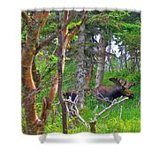 Bull Moose In Cape Breton Highlands Np-ns Shower Curtain