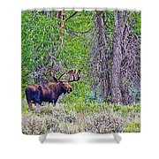 Bull Moose In Gros Ventre Campground In Grand Tetons National Park-wyoming Shower Curtain