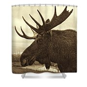Bull Moose In Sepia Shower Curtain