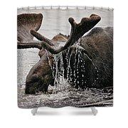 Bull Moose Shower Curtain