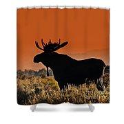Bull Moose Sunset Shower Curtain