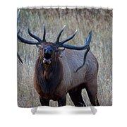 Bull Roar Shower Curtain