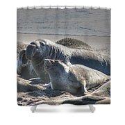 Bull Seal Shower Curtain