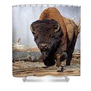 Bull Strut Shower Curtain