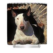 Bull Terrier Dog Shower Curtain