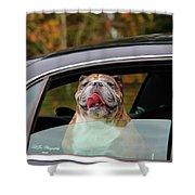 Bulldog Bliss Shower Curtain