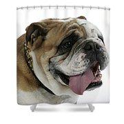 Bulldog, Male Panting Shower Curtain