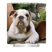 Bulldog Puppy With Flowerpots Shower Curtain