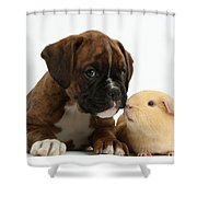 Bulldog Puppy With Yellow Guinea Pig Shower Curtain