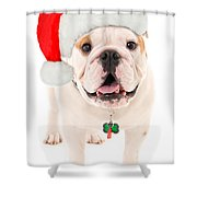 Bulldog Santa Shower Curtain
