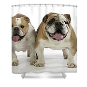 Bulldogs, Male And Female Shower Curtain