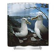 Bullers Albatrosses On Storm-lashed Shower Curtain