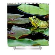 Bullfrog Shower Curtain