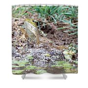 Bullfrog Leaping Shower Curtain