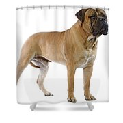 Bullmastiff Shower Curtain