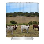 Bulls And Cow Shower Curtain