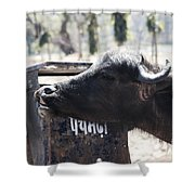 Bulls Cry Shower Curtain