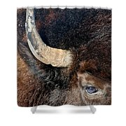 Bull's Eye Shower Curtain