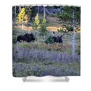 Bulls In The Meadow Shower Curtain