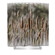 Bulrushes Shower Curtain