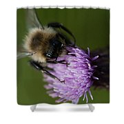 Bumble 1 Shower Curtain