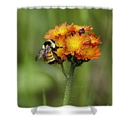 Bumble And Hawk Shower Curtain
