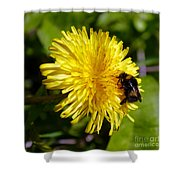 Bumble Bee And Dandelion Shower Curtain