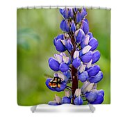 Bumble Bee And Lupine Shower Curtain