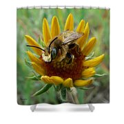 Bumble Bee Beauty Shower Curtain