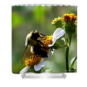 Bumble Bee Shower Curtain