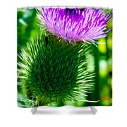 Bumble Bee On Bull Thistle Plant  Shower Curtain