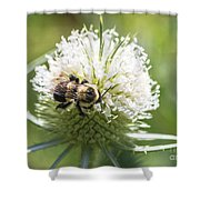 Bumble Bee On Button Bush Flower Shower Curtain