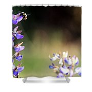 Bumble Bee On Lupine Shower Curtain