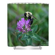 Bumble Bee On Red Clover  Shower Curtain
