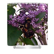 Bumble Bees In Flowers Shower Curtain