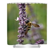 Bumble On Sage Shower Curtain