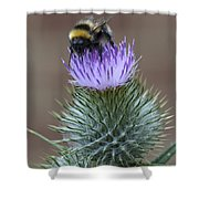 Bumble Thistle Shower Curtain