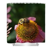 bumblebee and Echinacea Shower Curtain