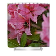 Bumblebee In Pink Shower Curtain