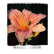 Bumblebee On Daylily Shower Curtain
