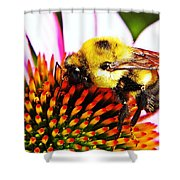 Bumblebee On Echinacea  Shower Curtain