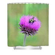 Bumblebee On Thistle 2013 Shower Curtain