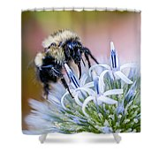 Bumblebee On Thistle Blossom Shower Curtain